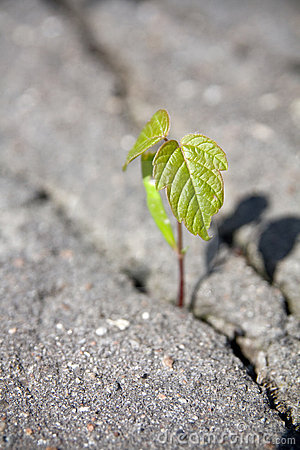 tree-s-sprout-14407281